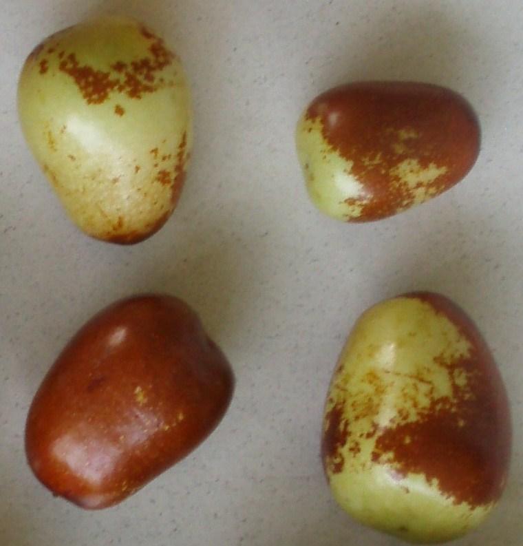 Rare Fruit: Jujubes