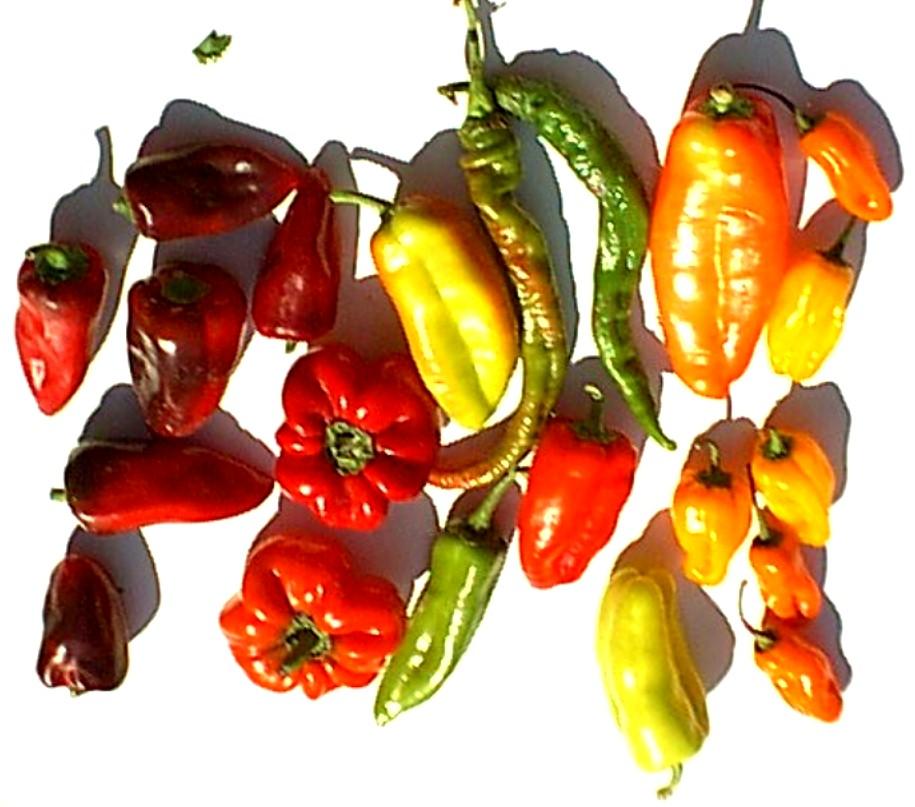 Best buys at the santa monica calif farmers market on - Best romanian pepper cultivars ...