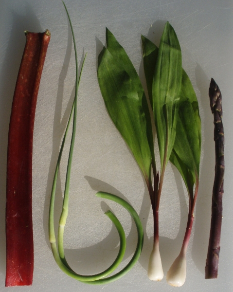 rhubarb, garlic scapes, ramps and asparagus