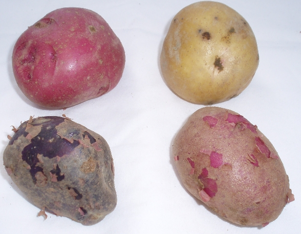 four potato varieties