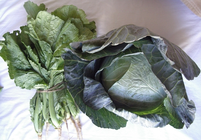 mustard greens and cabbage 032506k