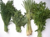 lemon grass and herbs 022506i