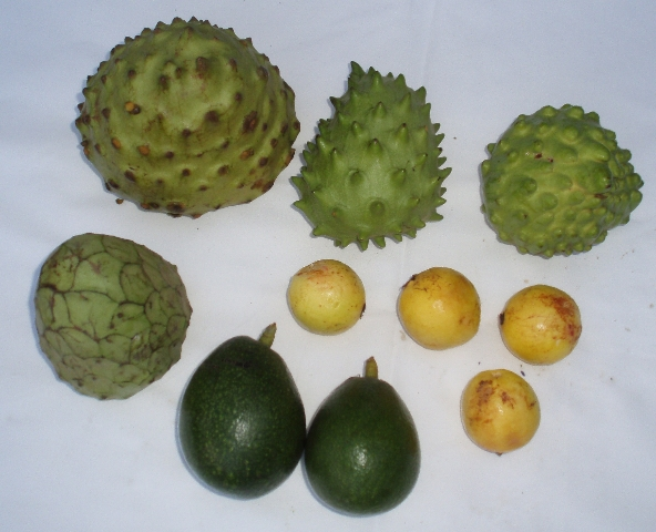 cherimoyas and guavas
