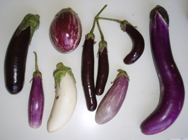 multiple eggplant varieties