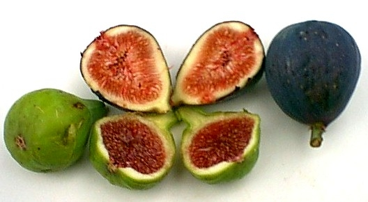 adriatic-mission-figs