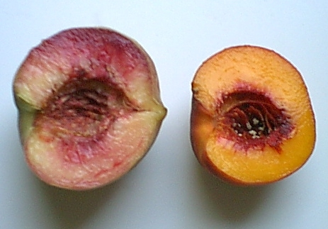 blood-ohenry-peaches-091405i