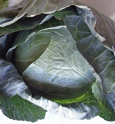 cabbage-032506