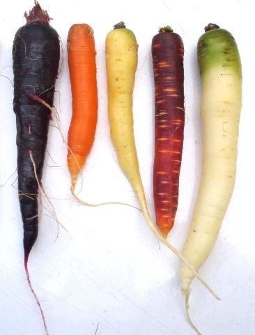 heirloom carrots from portland