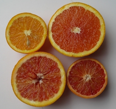 oranges-sb-022506m