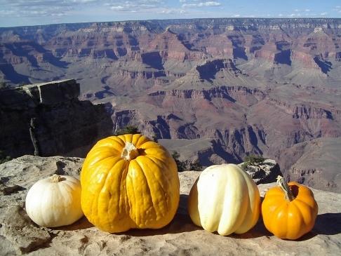 pumpkins-100905d